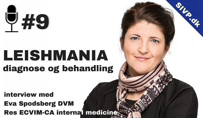 dyrlæge dvm eva spodsberg podcast om leishmania diagnose og behandling