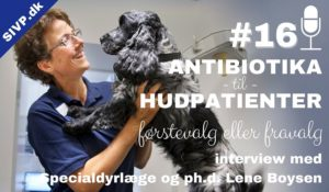 dyrlæge specialist lene boysen om antibiotika til hudpatienter