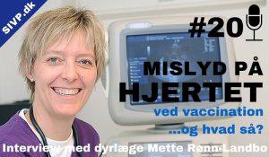 mislyd på hjertet hund kat ved vaccination dyrlæge Mette Rønn-Landbo fra Aalborg Dyrehospital