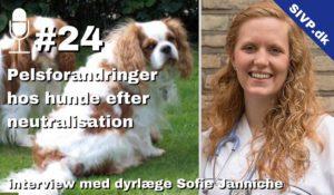 pelsforandringer hos hunde efter sterilisation og kastration sofie janniche