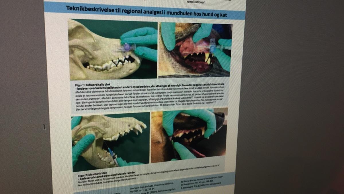 Smertestillende til hund og kat består bl.a. af effektiv lokalbedøvelse. Her ses eksempel med lokalanalgesi til tandprocedure.