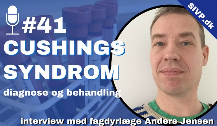 podcast om cushings syndrum hos hunde diagnose med fagdyrlæge anders p jensen