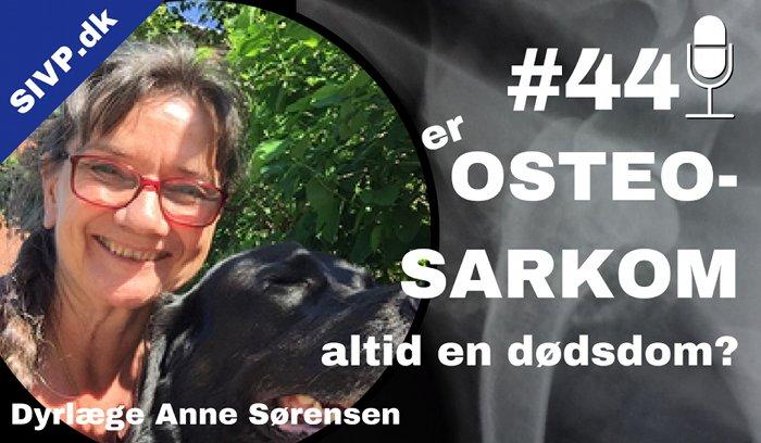 Osteosarkom hos hund: Symptomer og behandling her forklaret af dyrlæge Anne Sørensen fra Fasanvejens Dyreklinik