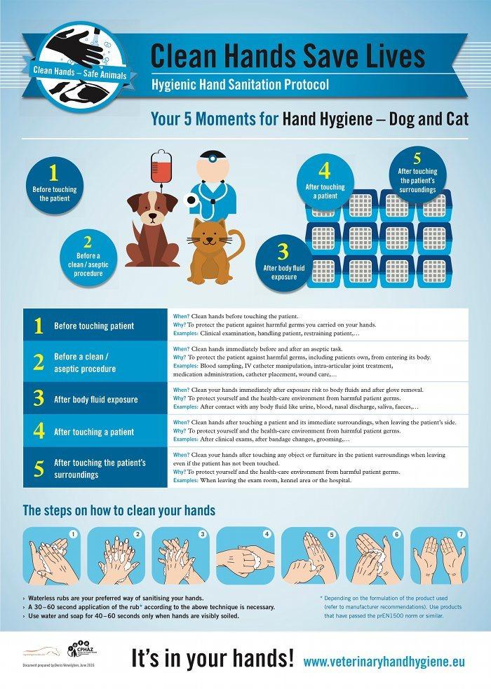 Rene hænder redder liv - sådan skal en dyrlæge vaske hænder
