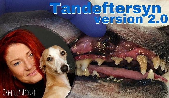 Hvor meget er et tandeftersyn værd med Camilla Heinze