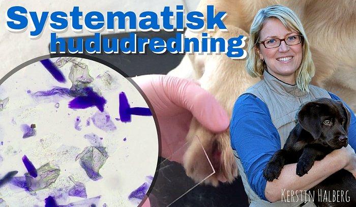 Online kursus i systematisk hududredning - effektivt til en præcis diagnose eller grundigt udredt før henvisning