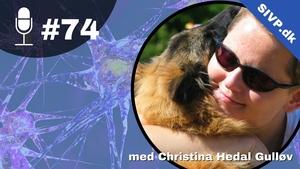 Akutte kramper hos hunde kan skyldes mange årsager. For at stille diagnosen epilepsi er det vigtigt med en grundig anamnese samt fuld klinisk og neurologisk undersøgelse, fortæller Christina Gulløv