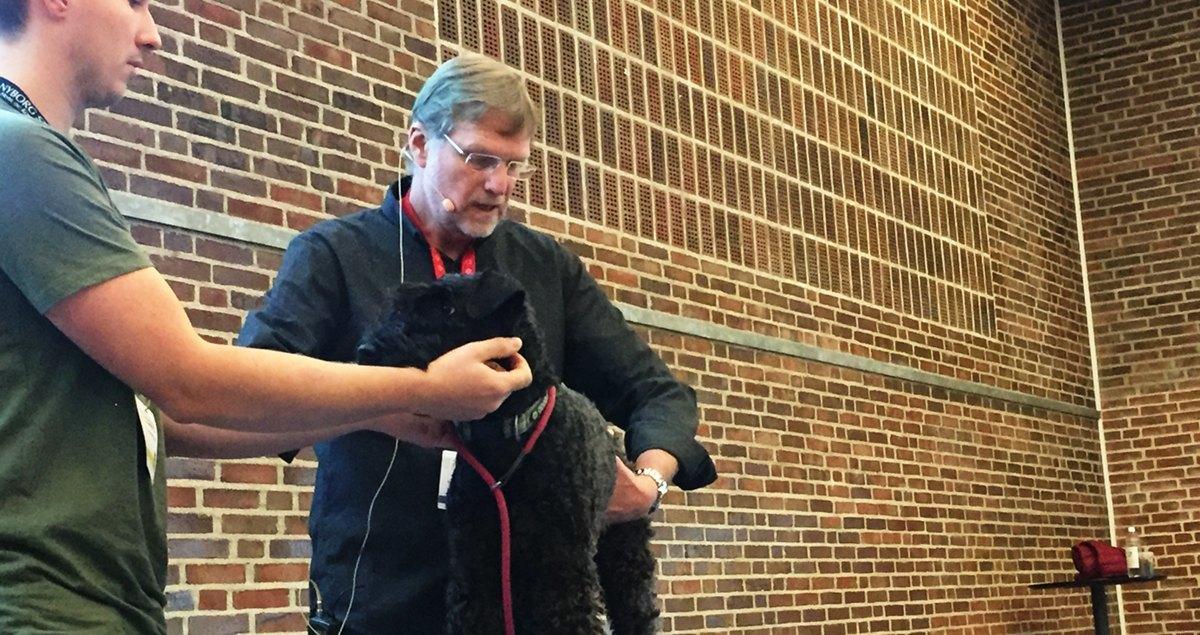 Dyrlæge Ken Lindeblad er ekspert i knogler og gigt hos hunde
